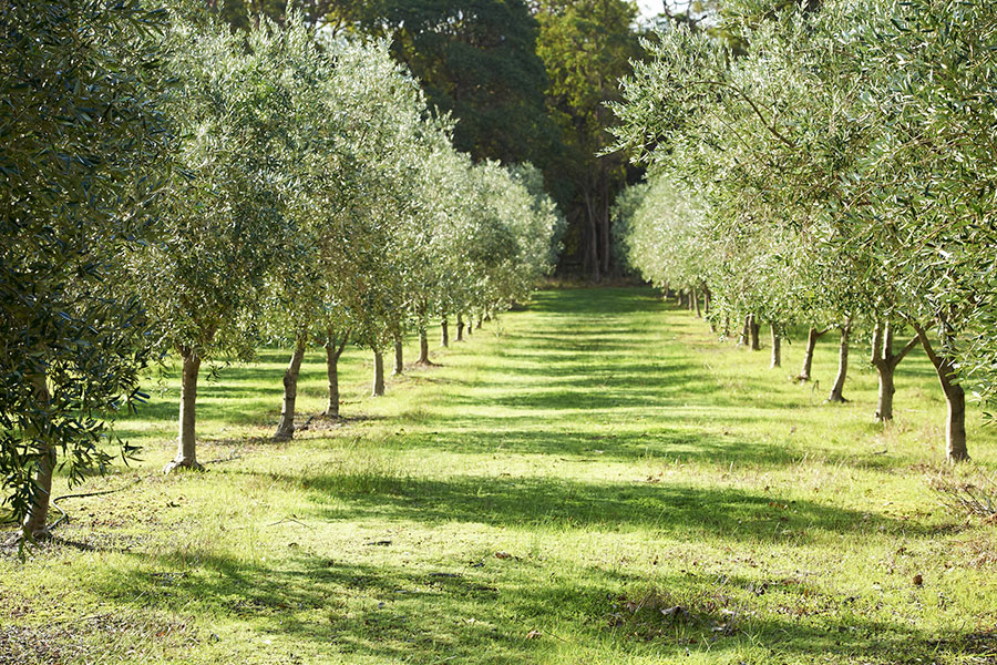 Olive-grove-Providore-Margaret-River
