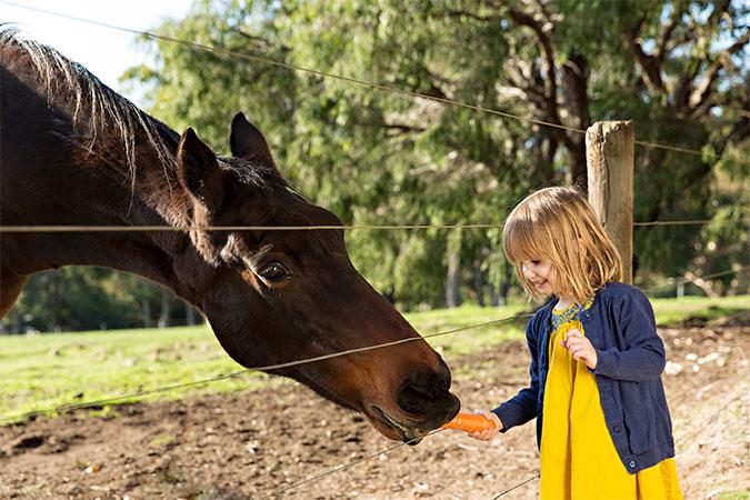 horse-wildwood