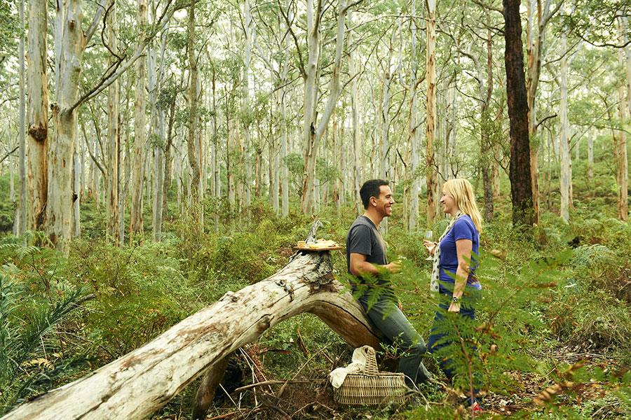 Boranup-Forest-Picnic-Margaret-River